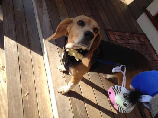 dennis lehane lost dog reward tessa