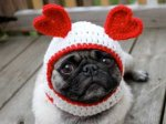 dog-etsy-valentines-day-2.png