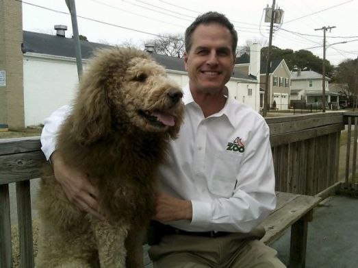 escaped lion dog labradoodle norfolk