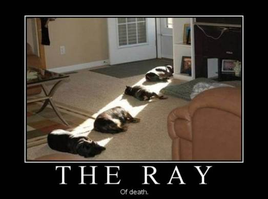 the ray of death dogscape poster