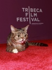 """Lil Bub & Friendz"" World Premiere - 2013 Tribeca Film Festival"