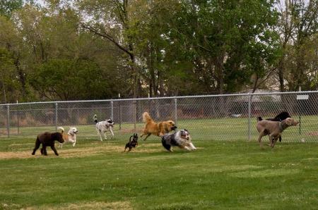 mandan dog town dogpark