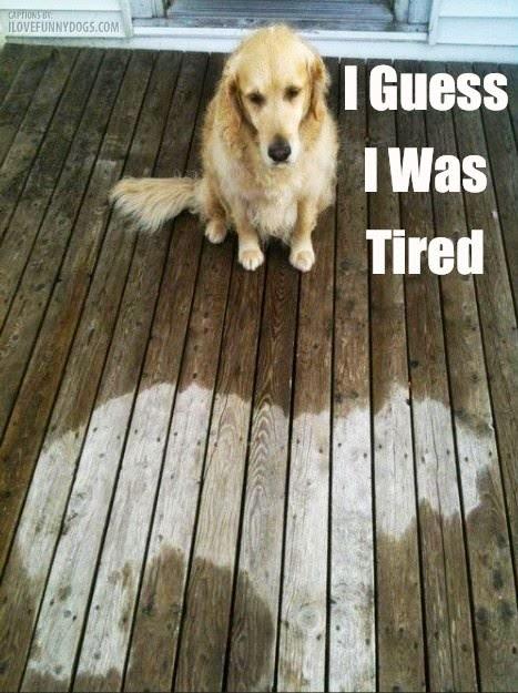 fridog