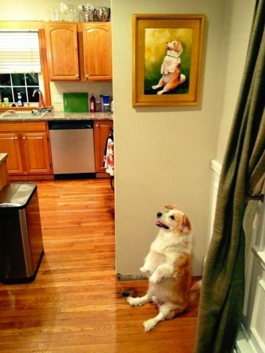 buzzfeed dog model