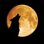howling-wolf-120809