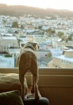 dog died book huffington post