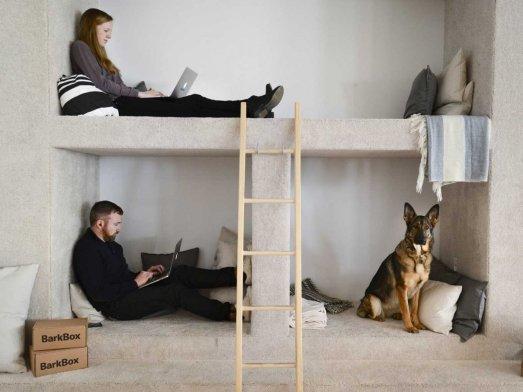 barkbox-office