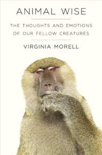 animal wise virgina morell
