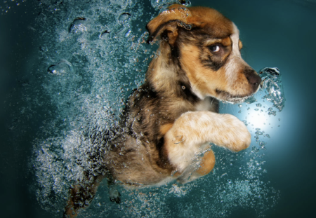 underwater puppies seth casteel npr