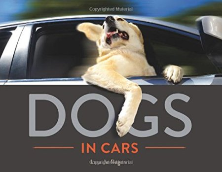 dogs in cars lara jo regan