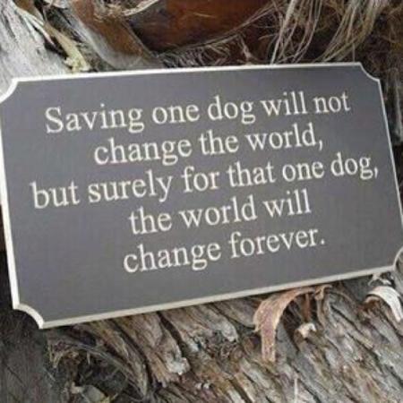 rescue-dog-quotes-1