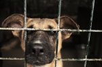 Rescued-Dogs
