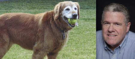 peter king mmqb si dog bailey tribute