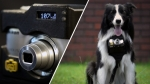 20150529212620-nikon-heartbeats-dog-pet-wearable