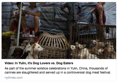yulin dog lovers vs dog eaters dog meat festival