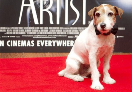 the-artist-dog-star-uggie-to-retire-acting-at-10