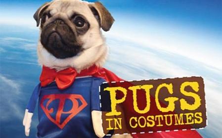 pugs-in-costume