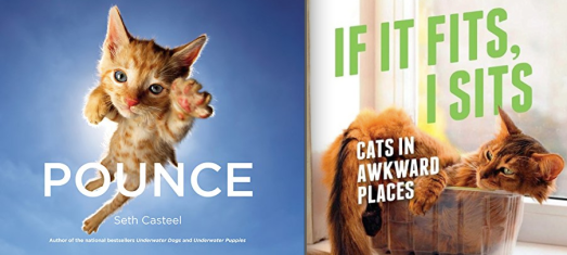 pounce-seth-casteel-if-it-fits-i-sits-cat-books